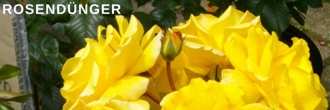 Gartenbedarf Cordtde Alles Für Den Garten Versandkostenfrei Ab 50